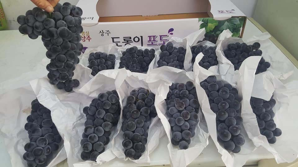 imported fresh fruit goods